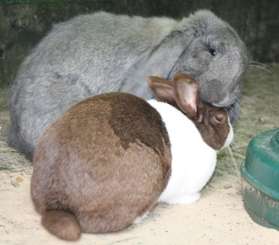 Lady en Obelix